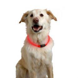 Collar para Perro con Banda Led de Seguridad