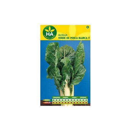 Semillas de Acelga Verde Penca Blanca