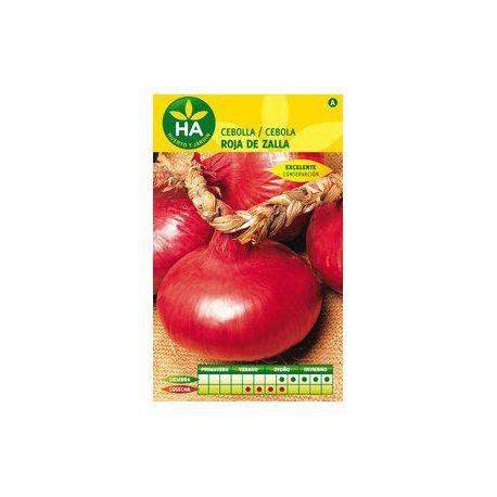Semillas Cebolla Roja de Zalla HA